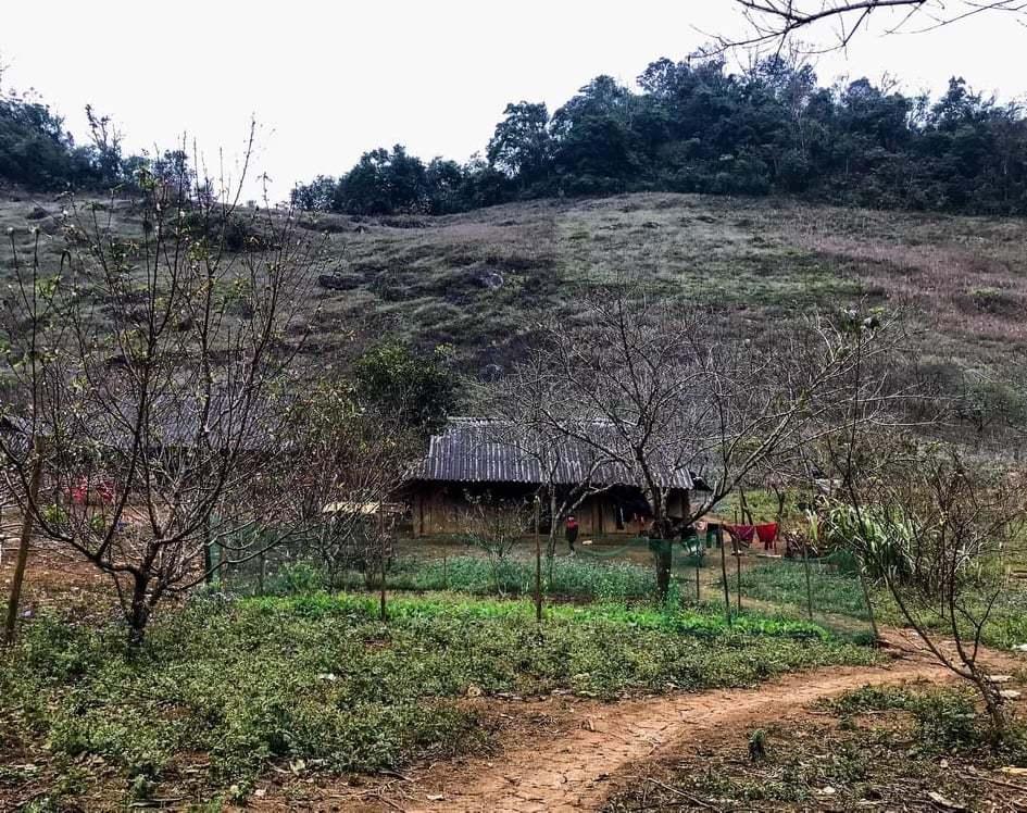 Người dân các tỉnh vùng cao được quyết mua bán, vận chuyển đào trồng
